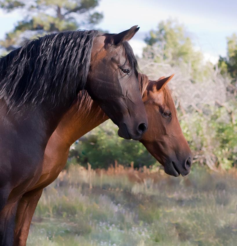 2009 091209 Closson Horses (132 rt square)