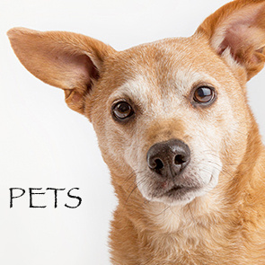 pets square